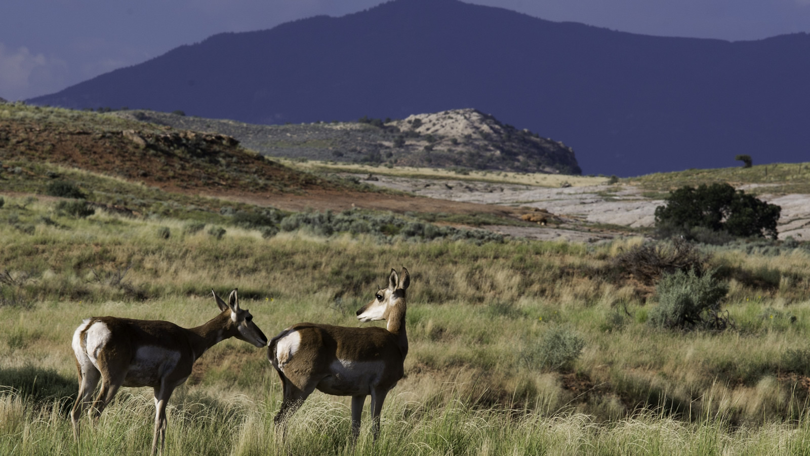 <h4>ORGAN MOUNTAINS-DESERT PEAKS (N.M.): THREATENED</h4><h5>New Mexico's Organ Mountains-Desert Peaks National Monument could lose its national monument status entirely.</h5><em>Bob Wick / BLM</em>